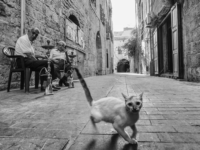 Unexpected protagonists - Animals in Streets