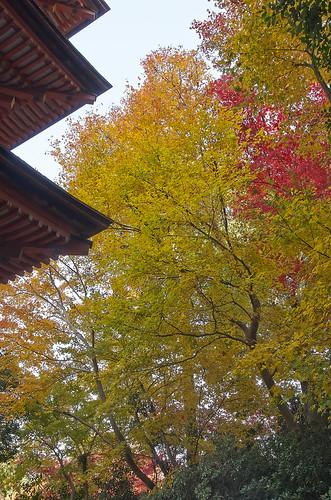 【写真】2013 紅葉 : 浄瑠璃寺/2019-08-22/IMGP3548