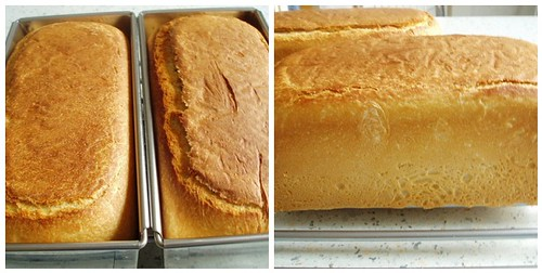 Toast- oder Sandwichbrot – Pain de Mie Variation 1 (2)