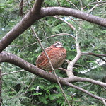 Tree bird