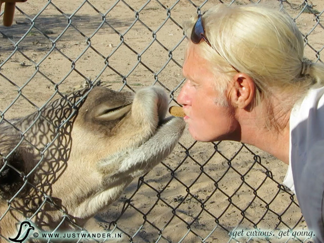 PIC: Out of Africa Wildlife Park - Bill kissed by a camel