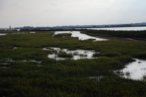 沼澤中不滿雜交種水草,林育朱攝影