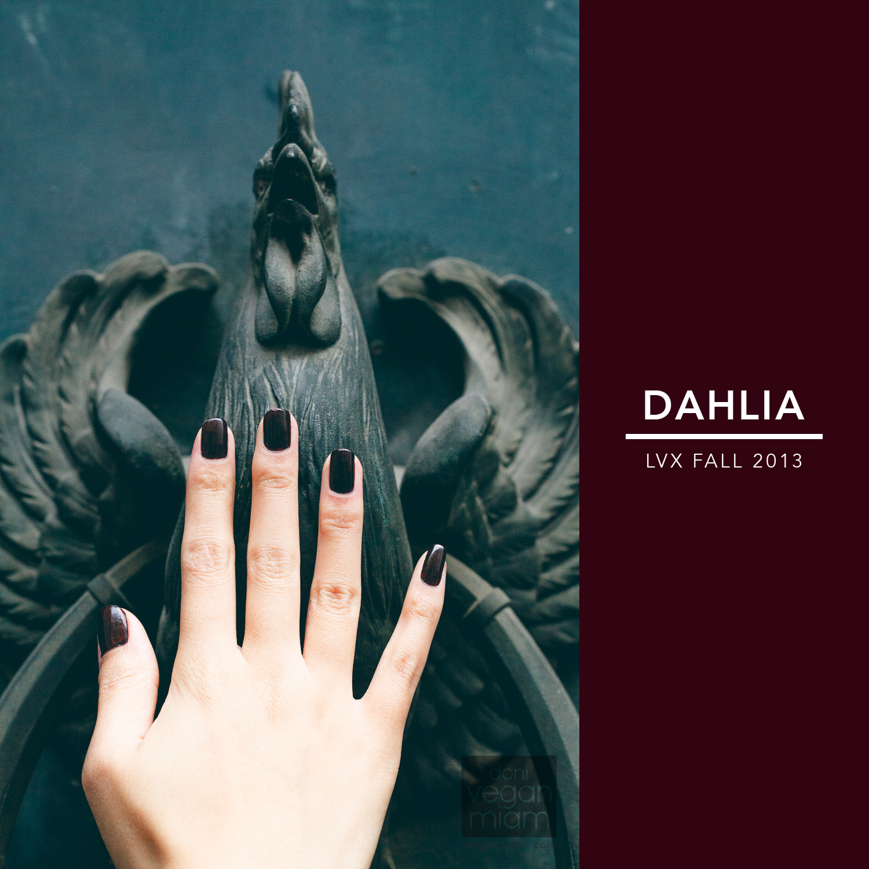 LVX Dahlia