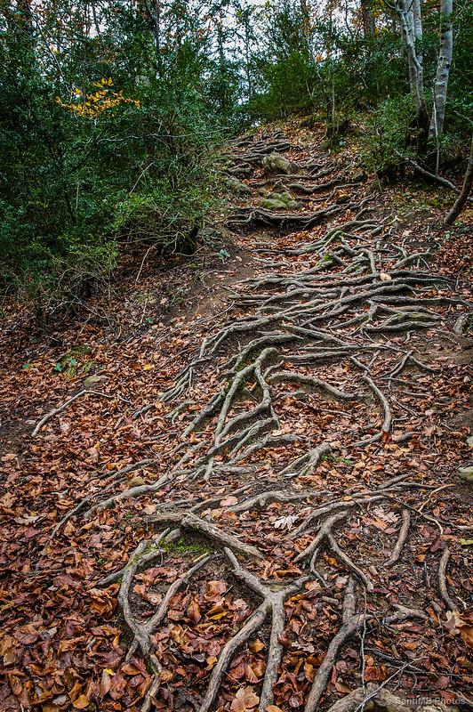 Las escaleras del bosque