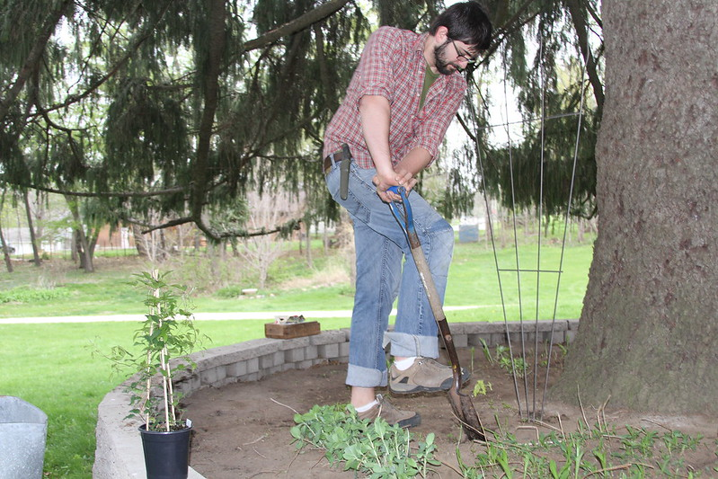 Planting Under the Pine