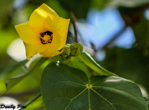 flower color netherlands dutch curacao caribbean antilles