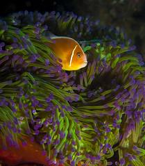 Diving with Suva Scuba Dive Club