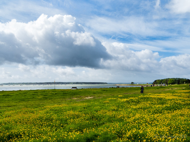 View across the celandines and Poole Harbour