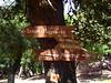Στην Καρδιά της Ικαρίας: Κυκλική διαδρομή στο Δάσος του Ράντη.
