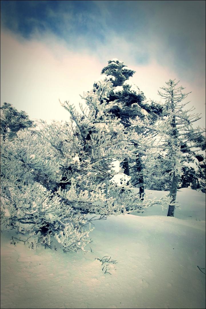 겨울 왕국-'한라산 성판악 - 백록담 겨울 산행.'