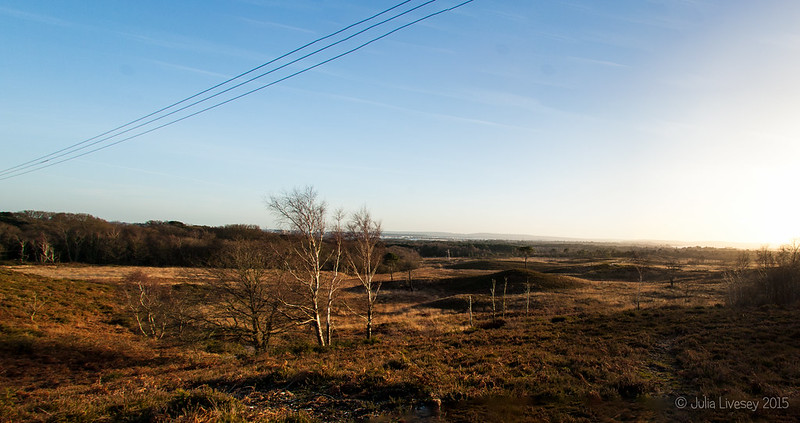 Panorma across Upton Heath