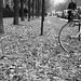 Small photo of Bike against the world - Paris