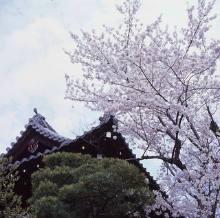 April in Kyoto