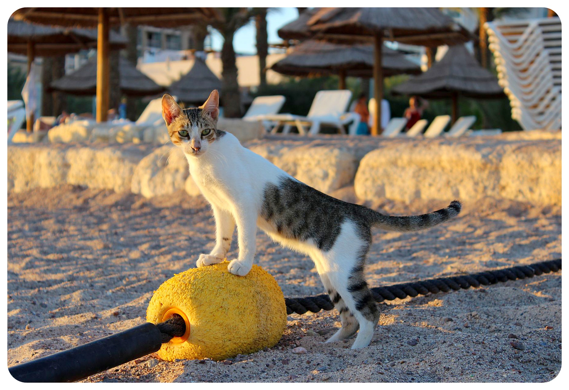 eilat beach cat israel