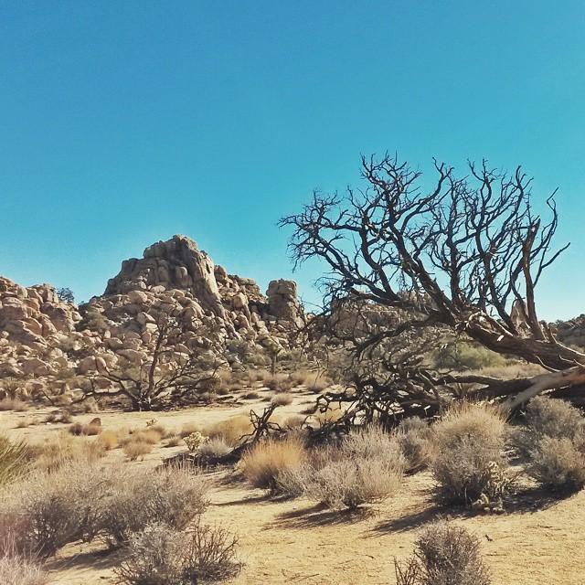 Joshua Tree kansallispuisto, Kalifornia