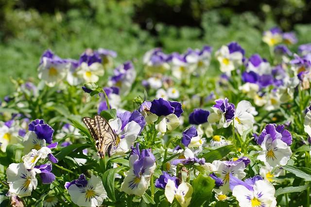 2016/05/04_神代植物公園-4