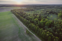 Forest | Aerial