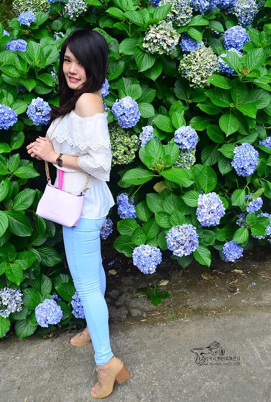 繡球花 (20)