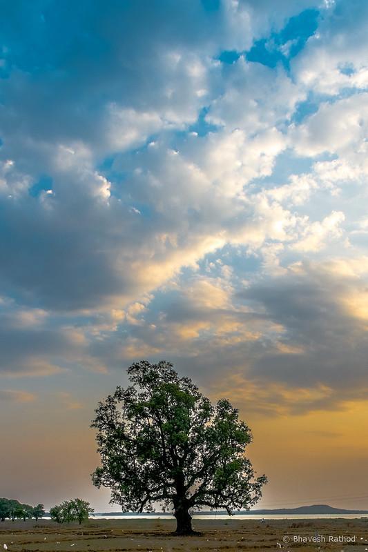 Sunset - Tadoba Andhari Tiger Reserve