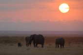 Safari im Amboseli-Nationalpark am frühen Morgen. Foto: Günther Härter.