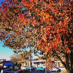 Glen Eden turnin on the colours #loveautumn #loveweather
