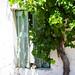 Kardamaina | 19. Window shutters