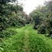 Small photo of Park near Tottenham Hale