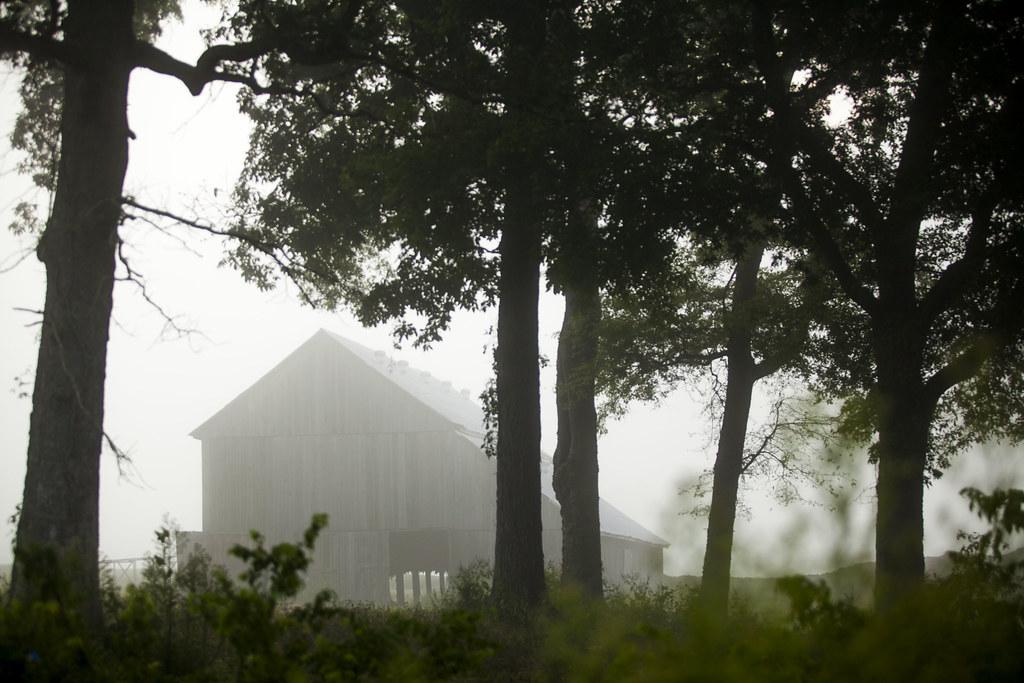 Morning Tobacco Barn