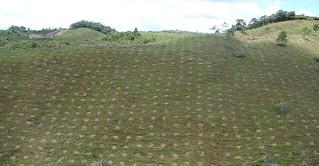 Reforestación Corantioquia