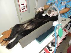 Black Bear cub #13-2425