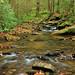 Frogtown Creek, DeSoto Falls Recreation Area, Chattahoochee National Forest, Lumpkin County, Georgia 1 by Alan Cressler