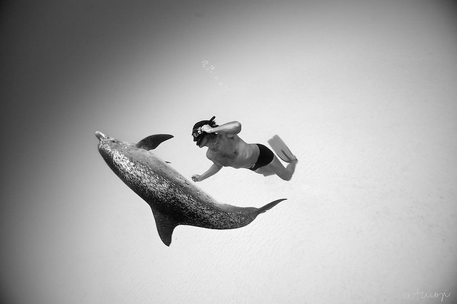 Bimini Dolphin Swim - 26/2013
