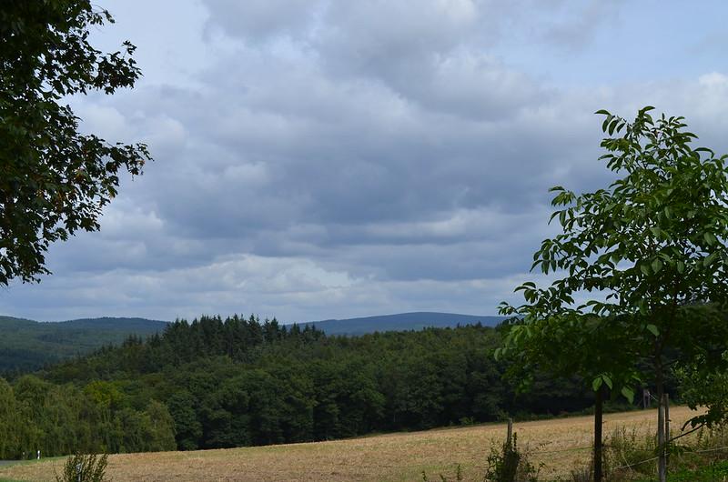 Rheingau Romantik Tour_forest