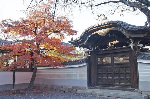 【写真】2013 紅葉 : 妙顕寺/2020-11-01/IMGP4151