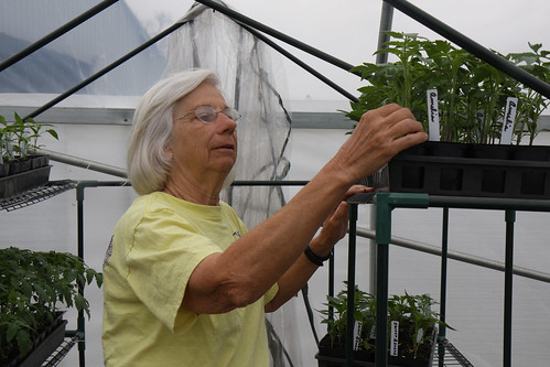 Barbara Robinson gets ready to plant tomatoes in her high tunnel at her farm, B&W Orchards. Robinson specializes in blueberries but grows other fruits and vegetables. Photo by NRCS.