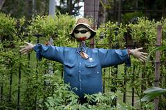 flower(0.0), gardener(0.0), forest(0.0), jungle(0.0), garden(1.0), tree(1.0), scarecrow(1.0), green(1.0),