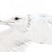 gull in oil by beachwalker2007
