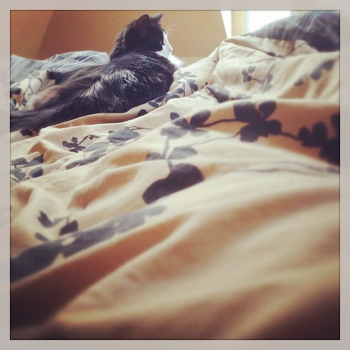 #fmsphotoaday March 9 - 10AM. Yes, still in bed. It's Daylight Savings, give me a break! #catsofinstagram