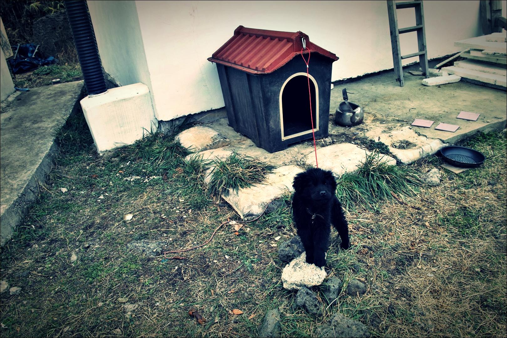 강아지-'제주도 자유 게스트하우스'