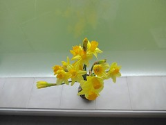 Daffodils on window shell by Julie70