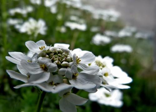*** giardino delicato...