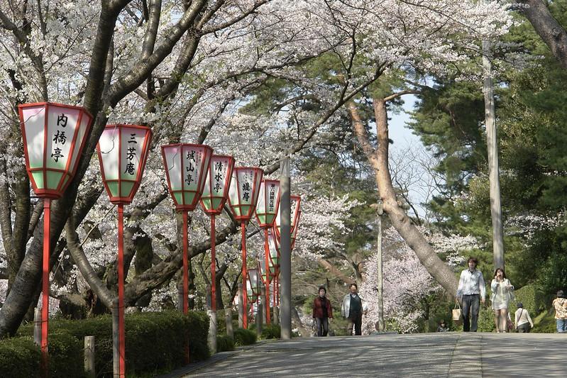 金沢桜満開! その3 金沢城趾公園の桜