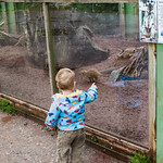 Watching the Meerkats at Dartmoor Zoo