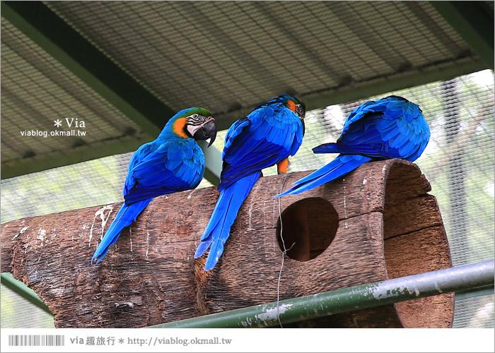 【新竹景點推薦】森林鳥花園~親子旅遊的好去處!在森林裡鳥兒與孩子們的樂園40