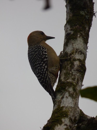 Tomada en Pérez Zeledón, Costa Rica