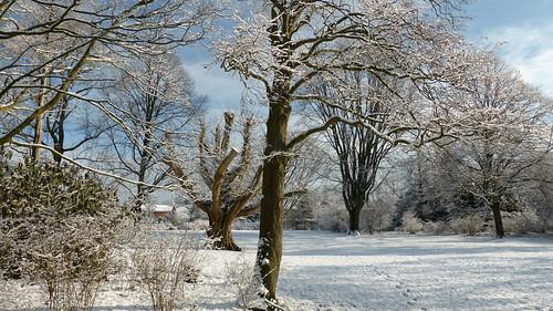 Photo of the day. Winterwonderland
