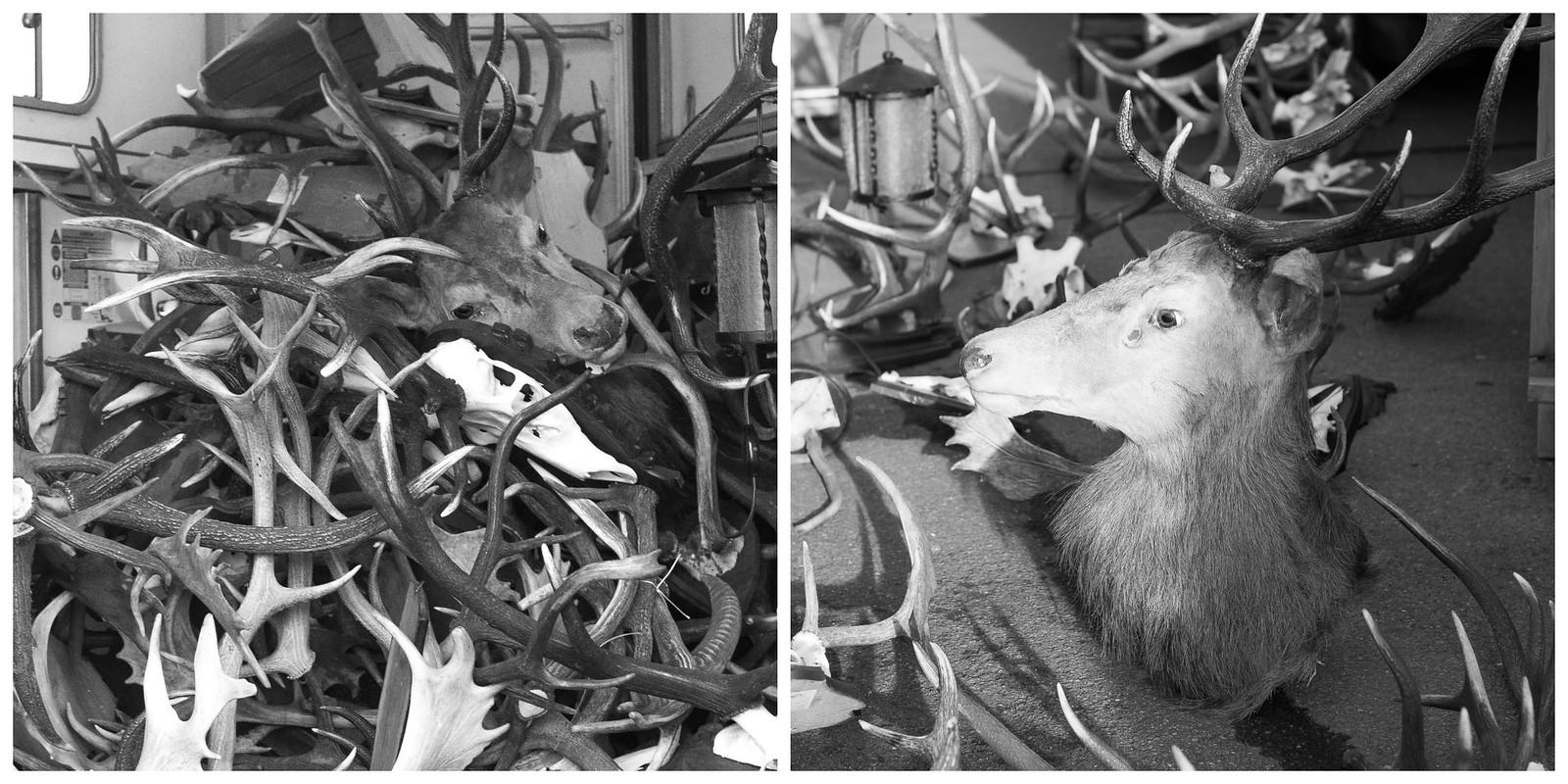 blog.antlers