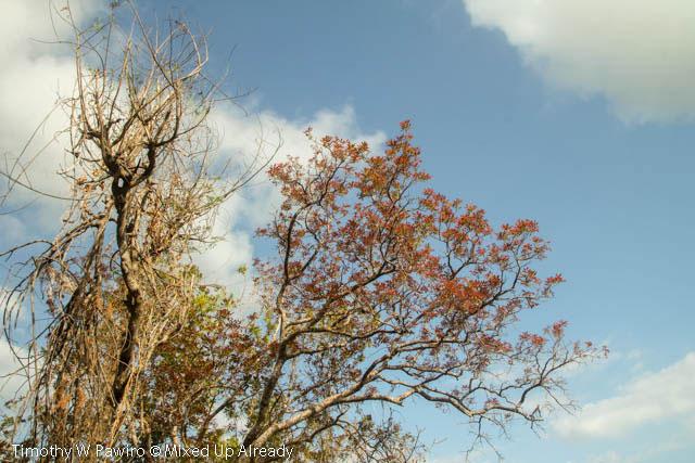 Indonesia - Sumba - Tarimbang - 08 - Blue Sky along the way