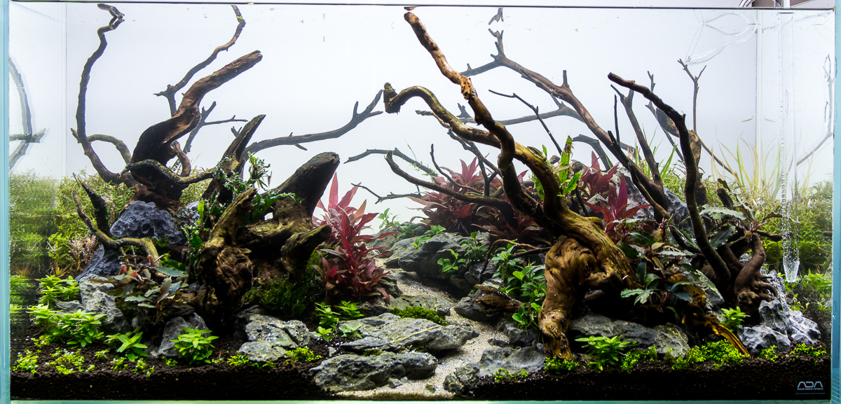 Exceptional Again Working With The Wood Changing Position And Adding Some. Aquascape Is  Not Progressing To The Original Concept.