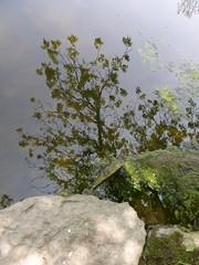 Herrick Lake 2016